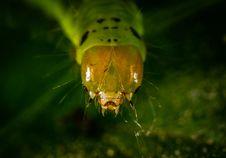 Free Caterpillar Close-up Photography Royalty Free Stock Photography - 118290567
