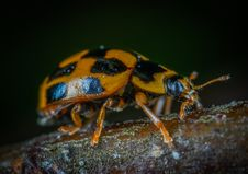 Free Brown And Black Bug Royalty Free Stock Images - 118290569