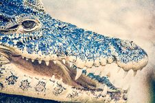 Free Macro Photography Of Black Crocodile Stock Photo - 118290600