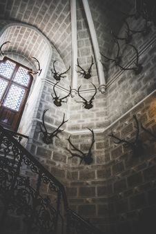 Free White Concrete Building Interior With Antlers Hanging Stock Photo - 118290630