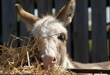Free Donkey, Fauna, Horse Like Mammal, Snout Royalty Free Stock Image - 118324466