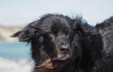 Free Dog, Dog Like Mammal, Dog Breed, Dog Breed Group Royalty Free Stock Photos - 118324468