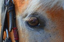 Free Horse, Eye, Mane, Nose Royalty Free Stock Photography - 118324527