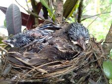Free Bird Nest, Bird, Fauna, Beak Royalty Free Stock Photos - 118324608