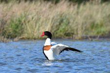 Free Bird, Water, Duck, Water Bird Stock Photo - 118324610