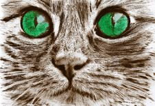 Free Cat, Whiskers, Small To Medium Sized Cats, Eye Stock Images - 118324674