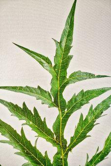 Free Plant, Leaf, Plant Stem, Vascular Plant Royalty Free Stock Image - 118325106