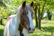 Free Horse, Mane, Horse Like Mammal, Pasture Stock Photos - 118325113
