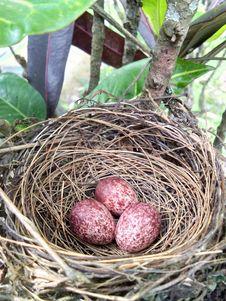 Free Bird Nest, Nest, Egg Stock Photo - 118325470