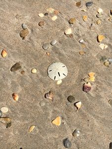 Free Sand, Seashell, Material, Texture Stock Photography - 118325562