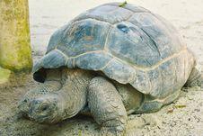 Free Tortoise, Turtle, Terrestrial Animal, Fauna Royalty Free Stock Image - 118325686