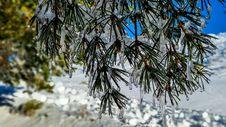 Free Winter, Tree, Snow, Branch Stock Photography - 118325712