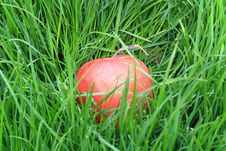 Free Red Apple Lying In The Grass Stock Photos - 11840383