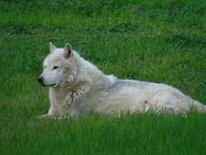 Free Grass, Dog Breed Group, Dog Breed, Dog Like Mammal Stock Image - 118430221