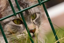 Free Cat, Whiskers, Green, Fauna Stock Photography - 118430252
