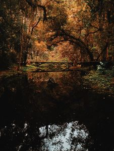 Free Brown Bridge Surrounded By Brown Leaf Trees Photo Royalty Free Stock Images - 118464879