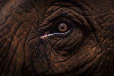 Free Elephant Eye Royalty Free Stock Images - 118464889
