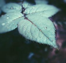 Free Focus Photography Of Green Leaf With Water Droplet Royalty Free Stock Photos - 118546128