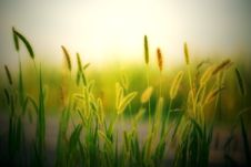 Free Blur, Countryside, Cropland Royalty Free Stock Photography - 118598807