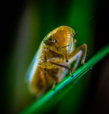 Free Macro Photography Of Brown Insect Royalty Free Stock Photo - 118598875