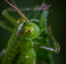 Free Animal, Antenna, Blurred Royalty Free Stock Photo - 118598895