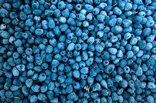 Free Abundance, Berries, Blueberries Royalty Free Stock Photography - 118758587