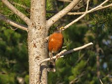 Free Bird, Fauna, Beak, Old World Flycatcher Stock Photo - 118778760