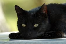 Free Cat, Black Cat, Black, Whiskers Royalty Free Stock Images - 118778769