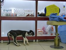 Free Dog, Dog Like Mammal, Carnivoran Royalty Free Stock Images - 118778939