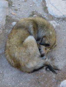 Free Mammal, Fauna, Fur, Meerkat Stock Photography - 118779052