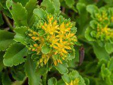 Free Flower, Plant, Flora, Subshrub Stock Photo - 118779170