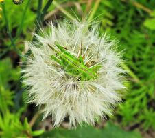 Free Flora, Plant, Flower, Close Up Stock Photography - 118779342
