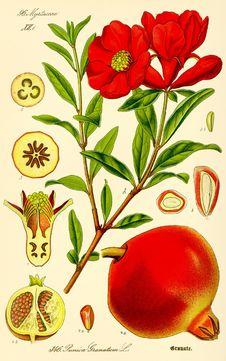 Free Flower, Flowering Plant, Plant, Fruit Stock Images - 118779974