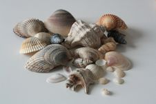 Free Cockle, Clam, Seashell, Clams Oysters Mussels And Scallops Stock Image - 118780181
