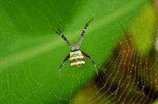 Free Spider, Arachnid, Orb Weaver Spider, Invertebrate Stock Photo - 118780190