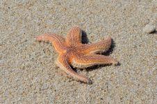 Free Starfish, Marine Invertebrates, Invertebrate, Echinoderm Royalty Free Stock Photography - 118780197