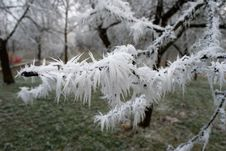 Free Frost, Freezing, Branch, Winter Stock Photos - 118780343