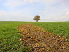 Free Oak Tree On The Horizon Royalty Free Stock Photography - 11880877