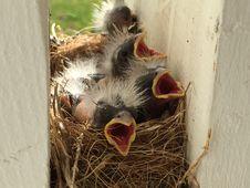 Free Fauna, Bird Nest, Beak, Nest Royalty Free Stock Image - 118871096