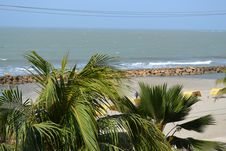 Free Sea, Vegetation, Palm Tree, Arecales Stock Photos - 118871213