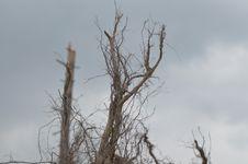 Free Sky, Branch, Tree, Twig Stock Photo - 118871250