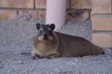 Free Fauna, Mammal, Rodent, Wildlife Stock Photography - 118871612
