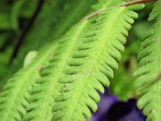 Free Vegetation, Leaf, Plant, Ostrich Fern Royalty Free Stock Image - 118871616