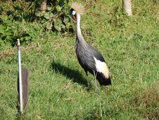 Free Bird, Crane Like Bird, Fauna, Nature Reserve Royalty Free Stock Image - 118871796