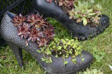 Free Plant, Grass, Shoe, Tree Stock Photos - 118871953
