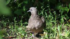 Free Fauna, Bird, Beak, Grass Royalty Free Stock Photo - 118871975