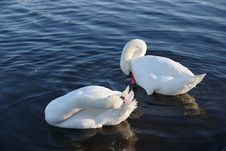 Free Swan, Water Bird, Bird, Ducks Geese And Swans Stock Photography - 118872692