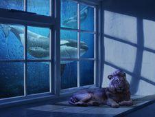 Free Blue, Window, Screenshot, Sky Stock Images - 118872824