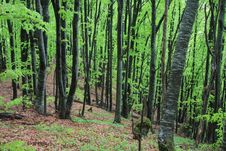 Free Green Forest Royalty Free Stock Photos - 11894598