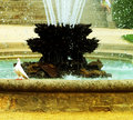 Free Fountain And Pigeon Stock Photo - 1192620